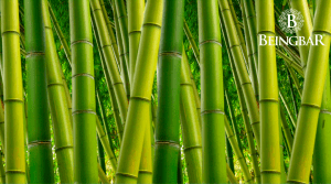 Why You Should choose Wood and Bamboo Sunglasses